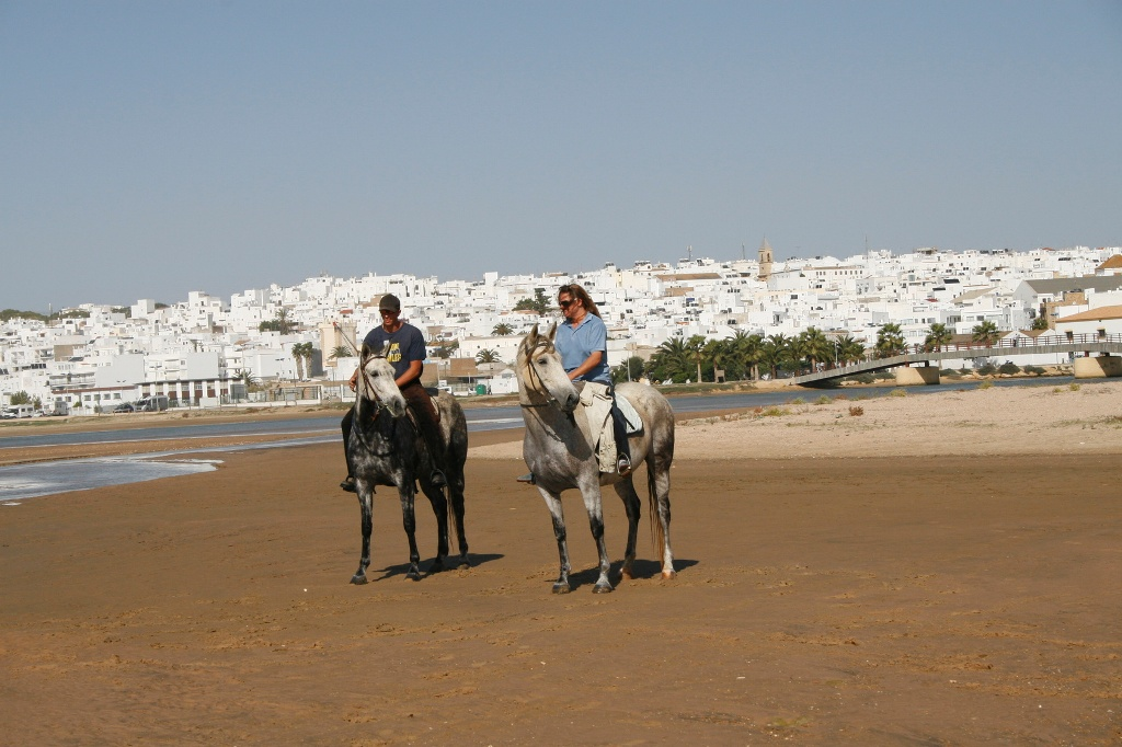 Pferde am Strand in Andalusien